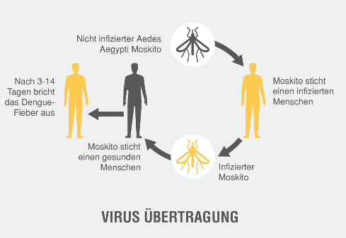 Dengue Virus Übertragung