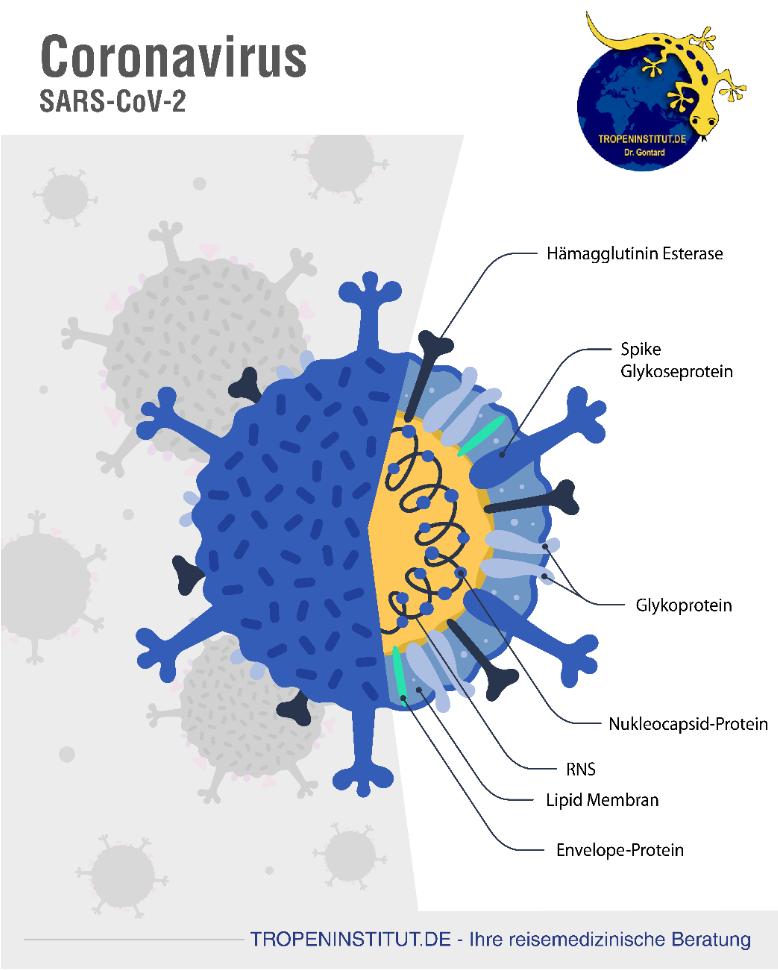 SARS CoV-2
