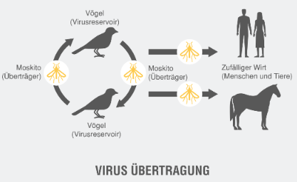 Übertragung West Nil Virus