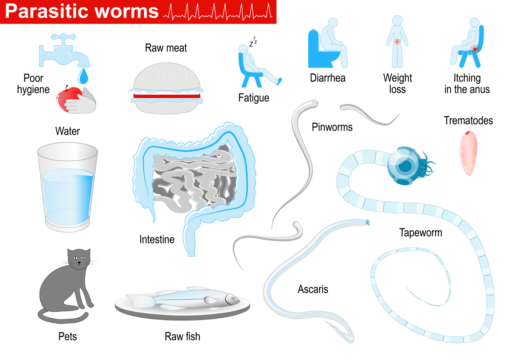 Cat And Worms Pictures